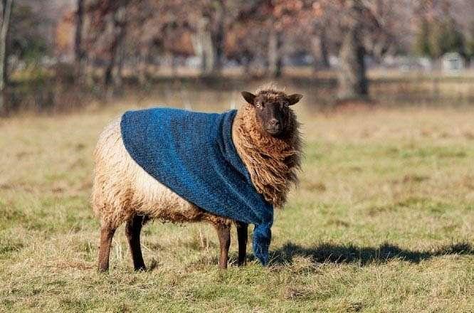 sheep-plaid-blanket